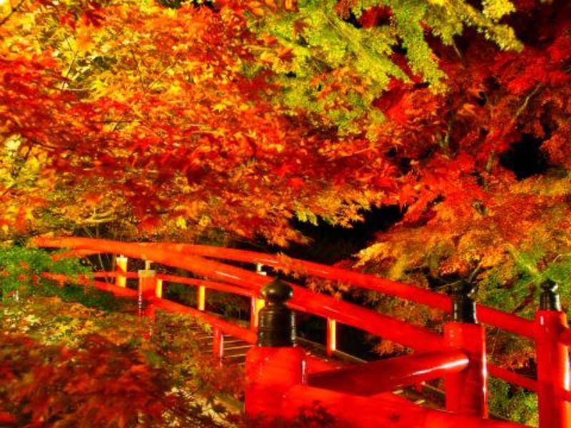 夜間點燈的紅葉與河鹿橋