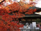 京都清水寺楓葉