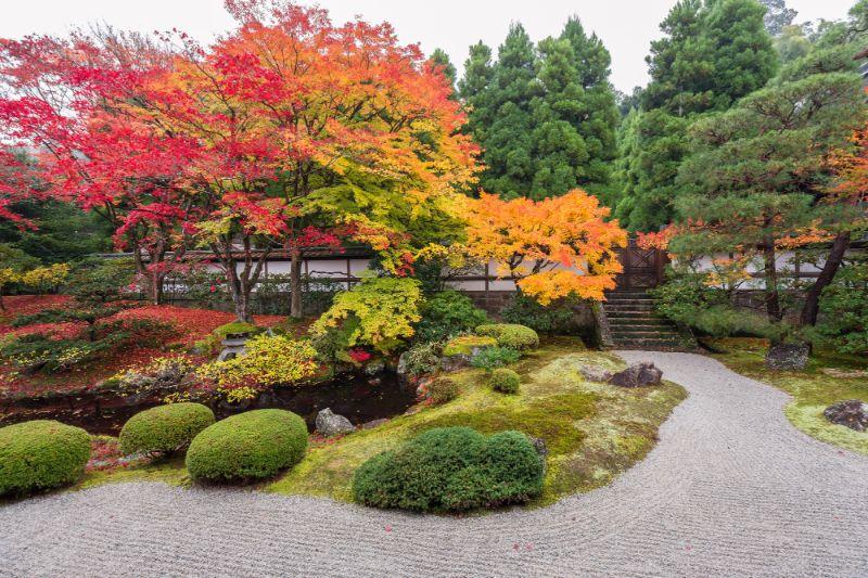 泉涌寺 御座所庭園前庭的楓葉