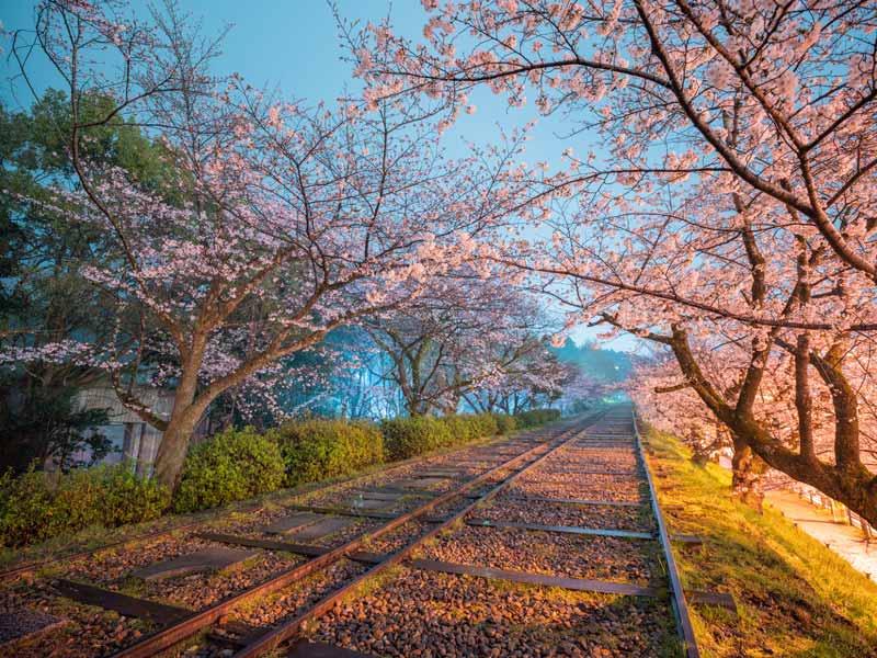 蹴上傾斜鐵道與櫻花