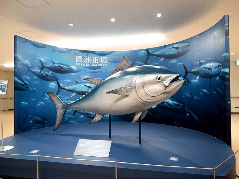 豐洲市場的鮪魚模型