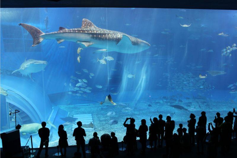 2021最新!沖繩美麗海水族館完整指南:門票、設施、美食&住宿一次介紹