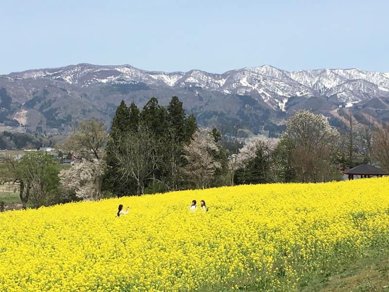 群山環繞油菜花