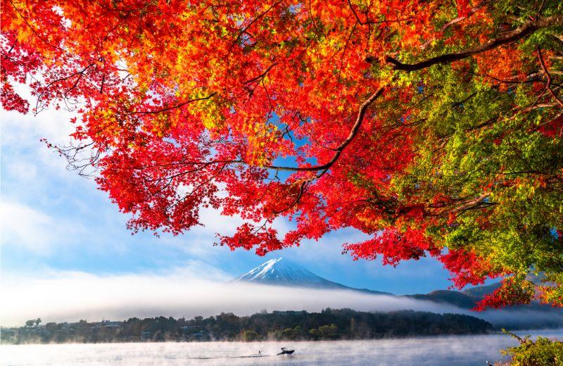 富士山與楓葉