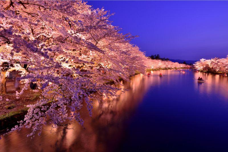 弘前公園的櫻花點燈