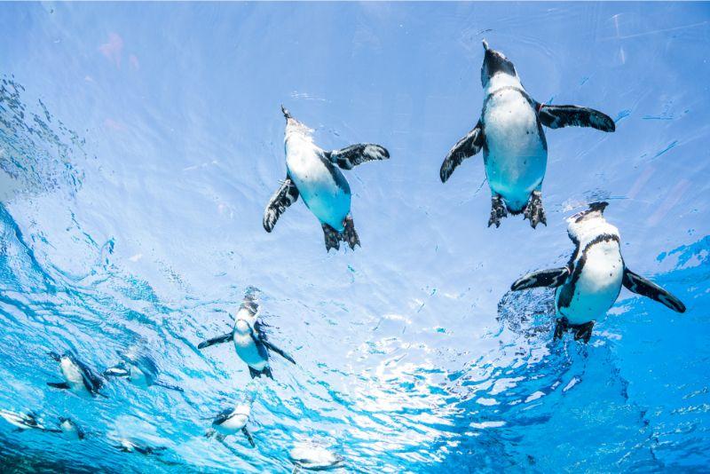池袋陽光水族館的企鵝