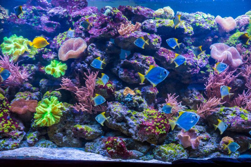 熱帶魚與水槽