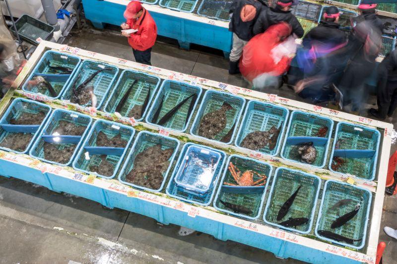 魚市場競標