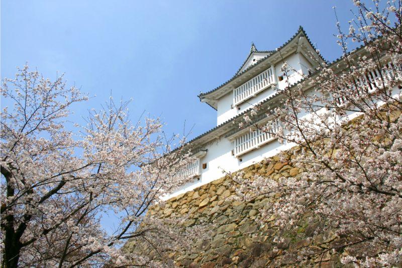鶴山公園(津山城)的櫻花