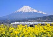菜花田、富士山和新幹線