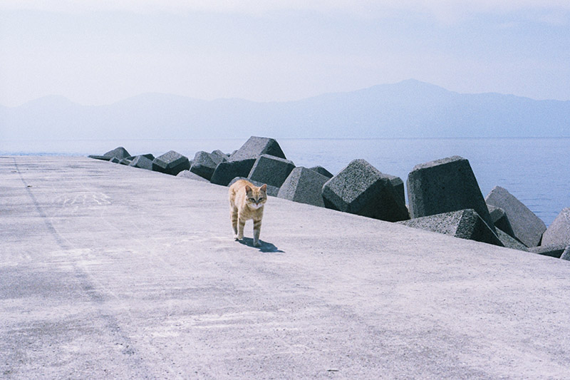 貓貓大軍佔領整座島!貓比島民還要多的愛媛縣「青島」