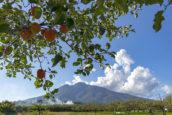 蘋果與岩木山