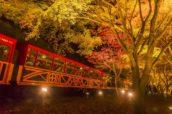 秋天晚上的嵯峨野小火車與楓葉