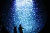 鶴岡市立加茂水族館的大水槽