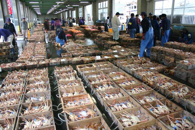 「津居山港」的螃蟹競標