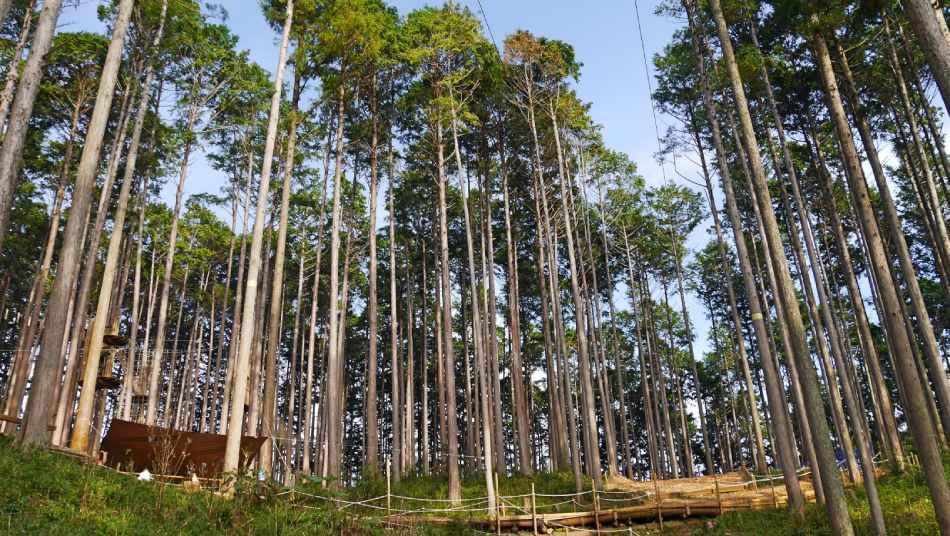 與森林共處快樂時光!到三重縣菰野「湯之山」享受空中漫步