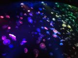墨田水族館的水母池